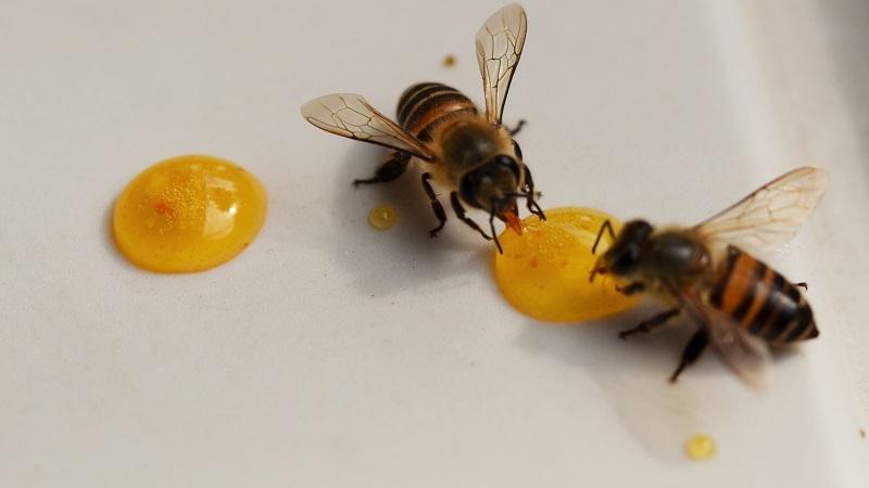 ハチミツと赤ちゃん